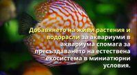 Декоративни рибки by Default anila channel